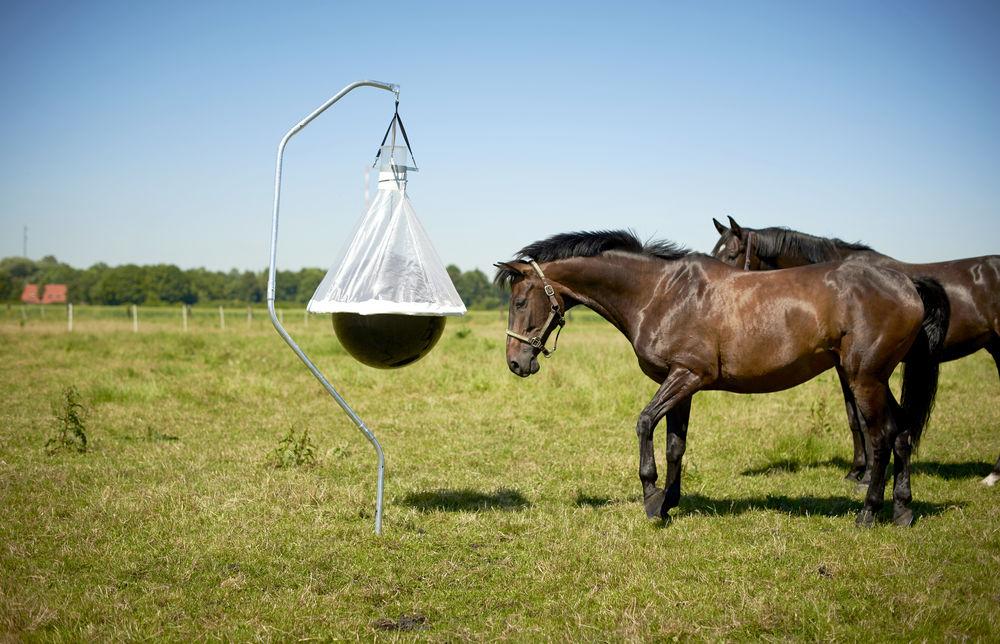 Taon-X auf Koppeln mit Pferden im Hintergrund